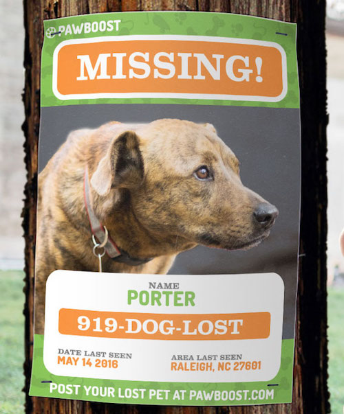Note the loud colors, legible phone number, and large picture of Porter in this lost pet flyer.