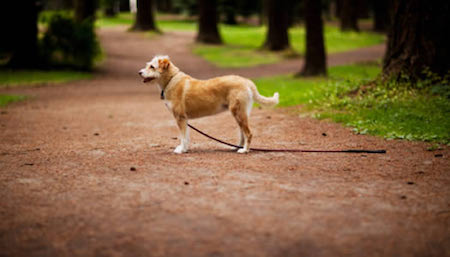 Sightings can help refine the search for your lost pet.