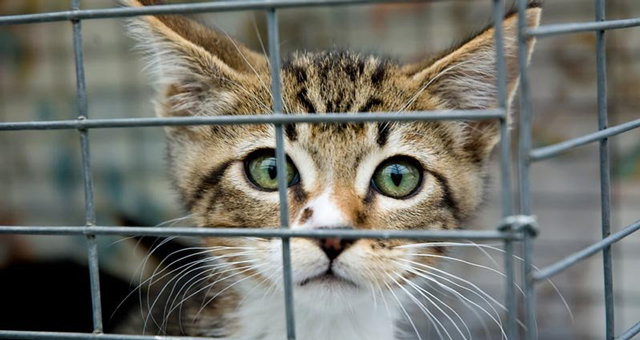 Do not assume you will be contacted if your pet is taken in to a shelter – even if your furbaby is chipped!