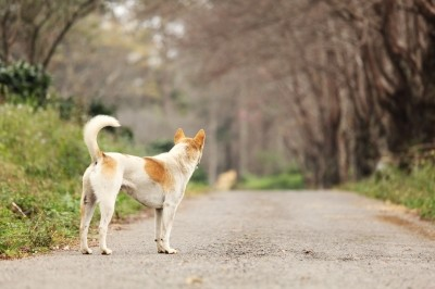 Most lost pets don't stray too far from their homes, so pound that pavement!