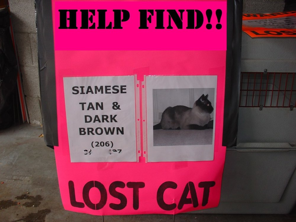Using fluorescent colors will help your pet's poster stand out in a big way. Photo Credit: Missing Pet Partnership