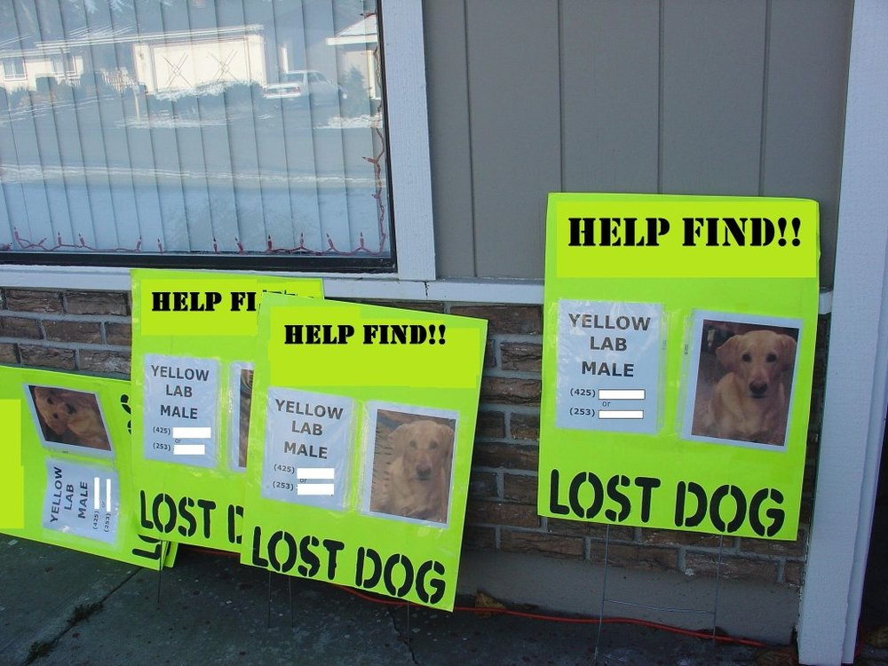 Laminating your poster will help it remain legible for longer. Photo Credit: Missing Pet Partnership