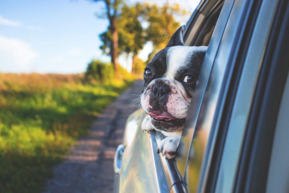 Reuniting a pet with her family is one of the best feelings in the world. Photo credit: Pexels