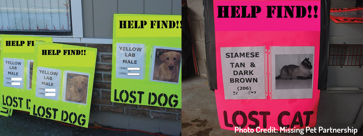 Creating an Eye-Catching Lost Pet Poster: What You Need to Know ...