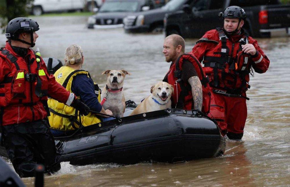 Photo Courtesy of Melissa Phillip via Houston Chronicle