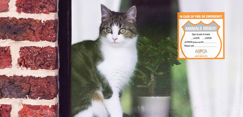 Photo Courtesy of ASPCA