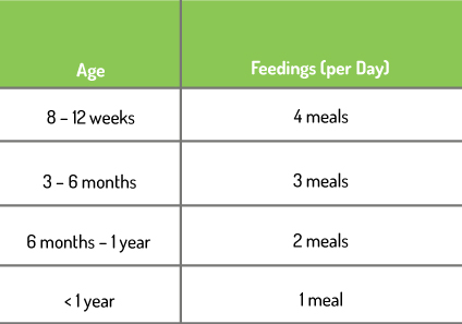 *Note: For some larger adult canines or those dogs prone to bloat, it may be better to feed them two smaller meals per day
