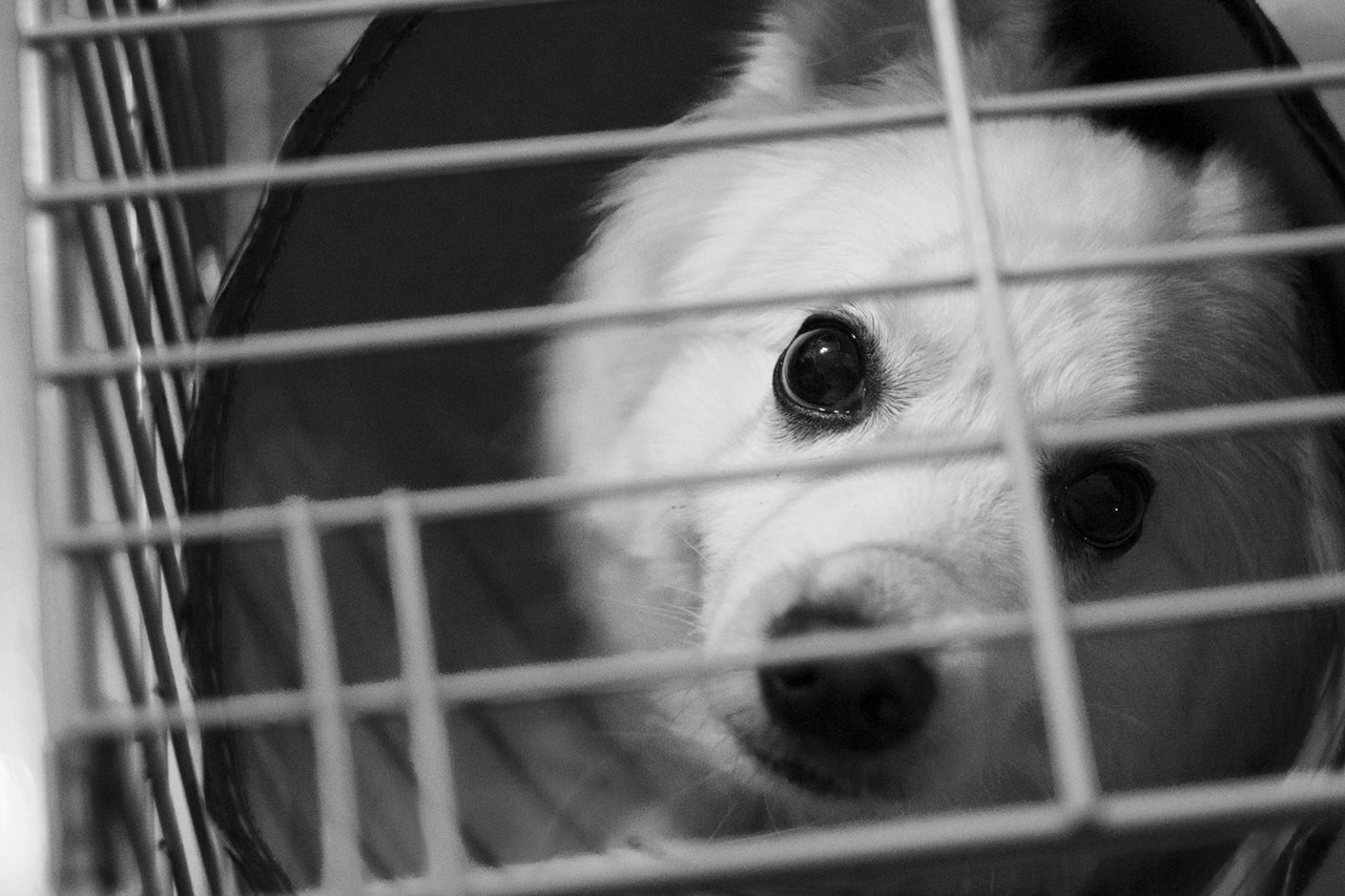 What To Do With a Found Pet: A Step-By-Step Guide For Creating a